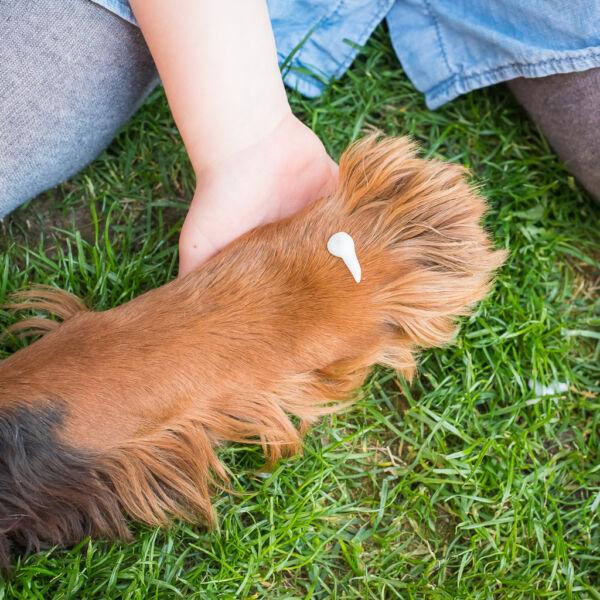 HerbArting kutyamancsmosó sampon 250 ml állag